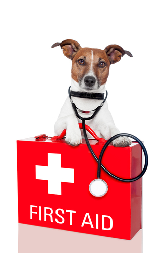 Dog health First aid kit
