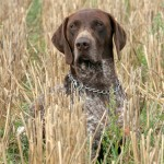 Gun Dog Training Equipement